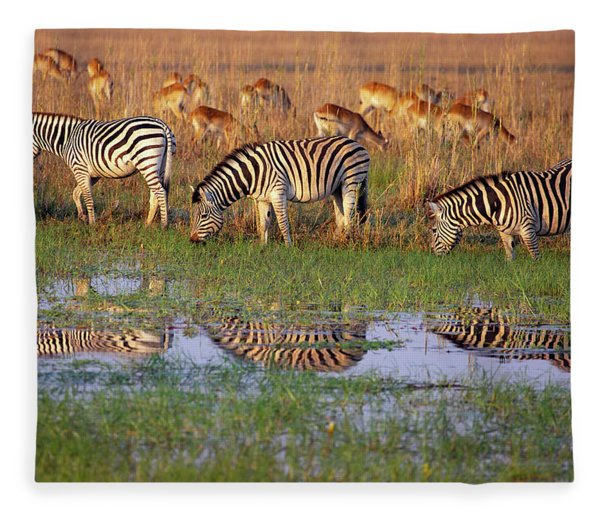Zebras In Botswana Fleece Blanket
