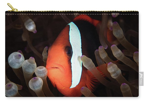 A Red And Black Anemonefish Swims Among Carry-all Pouch