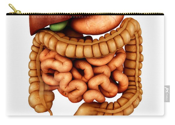 Anatomy Of Human Digestive System Carry-all Pouch