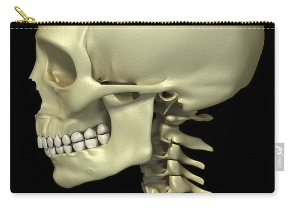 Bones Of The Head And Neck Carry-all Pouch