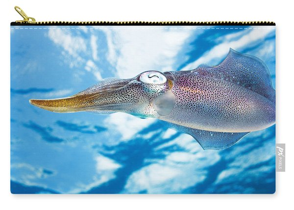Caribbean, Reef Squid Sepioteuthis Carry-all Pouch