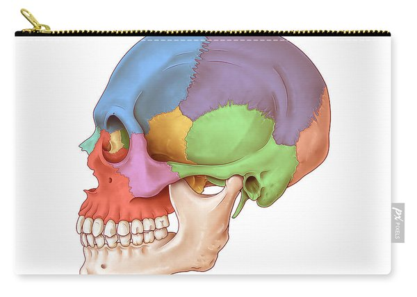 Lateral Skull, Illustration Carry-all Pouch