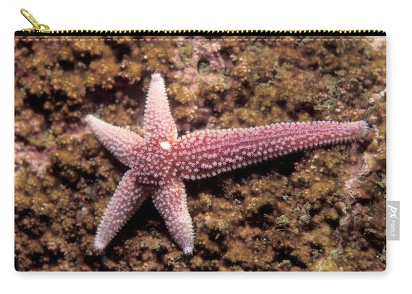Northern Sea Star Carry-all Pouch