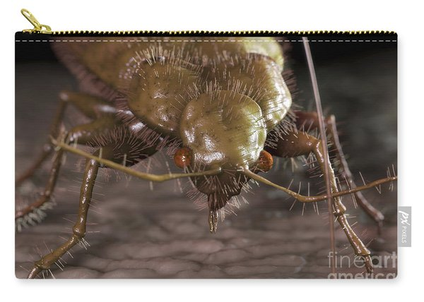 Bedbug Cimex Lectularius Carry-all Pouch