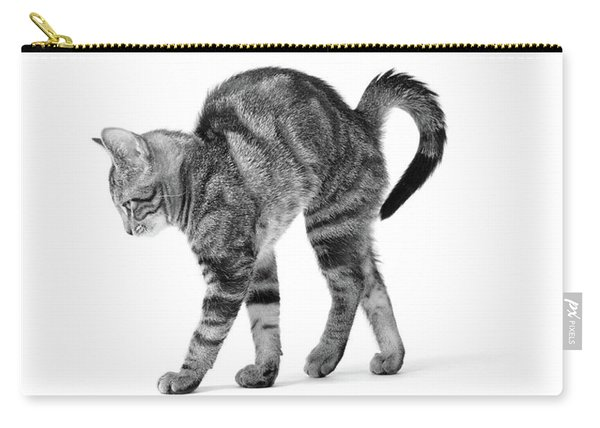 1960s Side View Of Kitten Stretching Carry-all Pouch