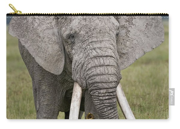 African Elephant Loxodonta Africana Carry-all Pouch