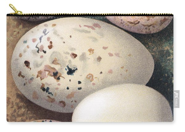 Assorted Birds Eggs, Historical Art Carry-all Pouch