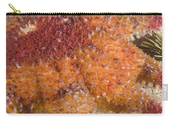 Spiny Sunstar Carry-all Pouch
