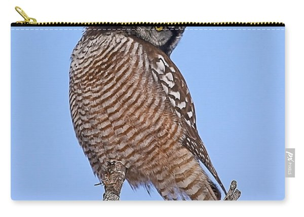 Northern Hawk Owl Carry-all Pouch