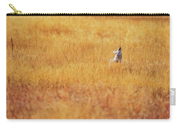 A Coyote Hunting Insects In A Golden Carry-all Pouch