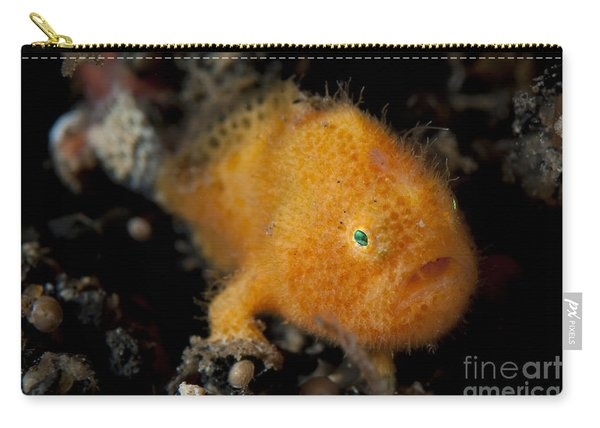 A Juvenile Hairy Frogfish, Lembeh Carry-all Pouch