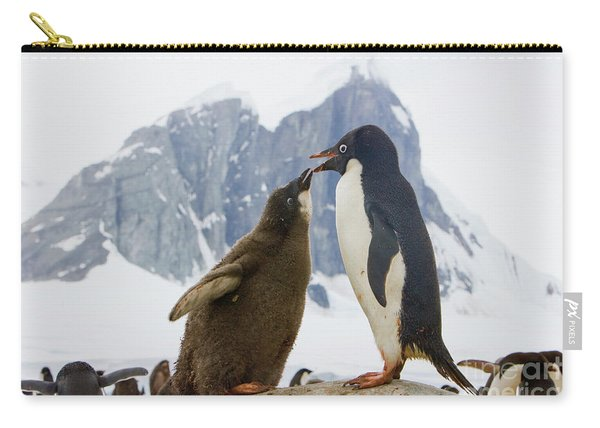 Adelie Penguin Chick Begging For Food Carry-all Pouch