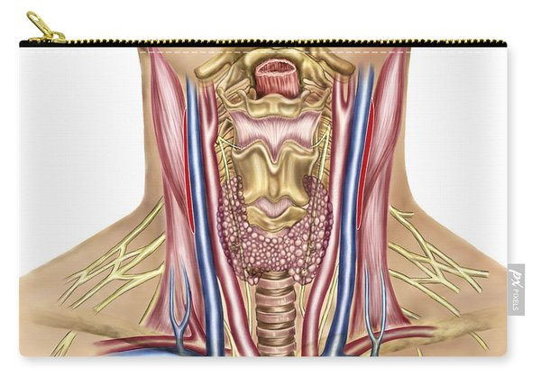 Anatomy Of Human Neck Carry-all Pouch