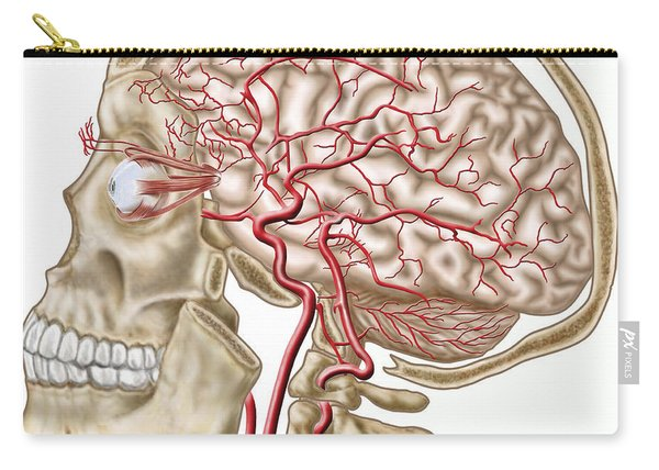 Anatomy Of Human Skull, Eyeball Carry-all Pouch