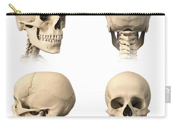 Anatomy Of Human Skull From Different Carry-all Pouch