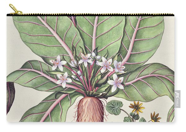 Autumn Mandrake Carry-all Pouch