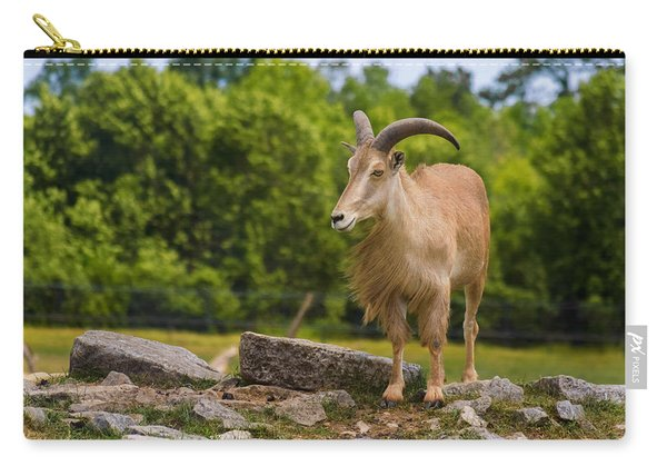 Carry-all Pouch featuring the photograph Barbary Sheep by Garvin Hunter