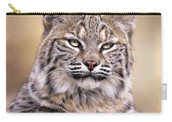 Bobcat Cub Portrait Montana Wildlife Carry-all Pouch