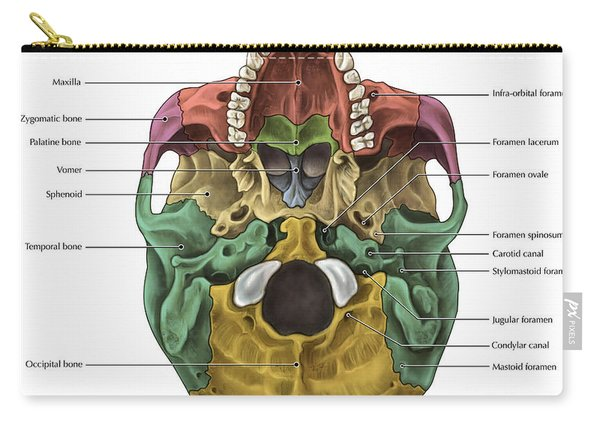 Bones Of The Skull Inferior Carry-all Pouch