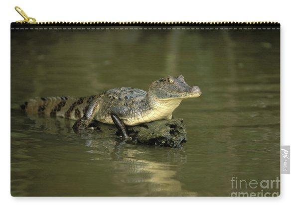 Caiman Crocodile Carry-all Pouch