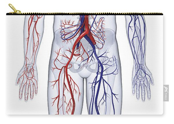 Cardiovascular System, Human Body Carry-all Pouch