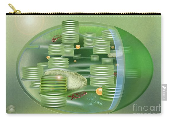 Chloroplast - Basis Of Life - Plant Cell Biology - Chloroplasts Anatomy - Chloroplasts Structure Carry-all Pouch