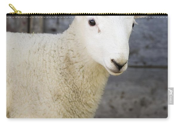Close Up Of A Baby Lamb Carry-all Pouch
