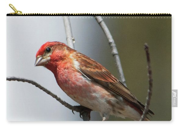 Close-up Of A Red-headed Purple Finch Carry-all Pouch