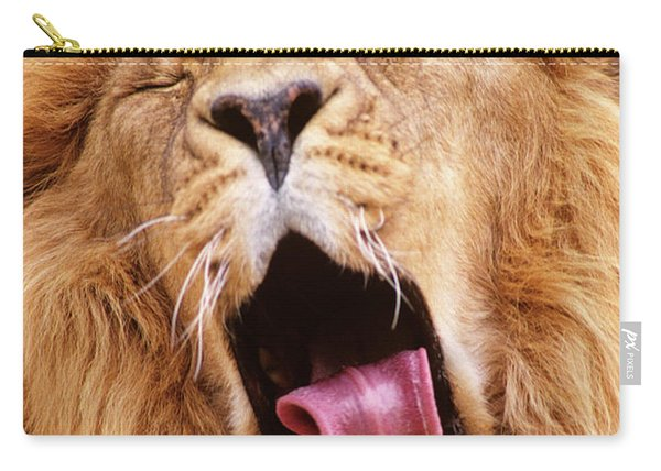 Close-up Of Asiatic Lion Yawning Carry-all Pouch