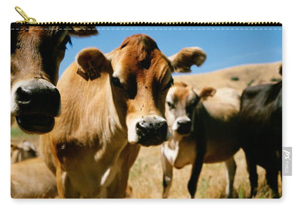 Close Up Of Cows, California, Usa Carry-all Pouch