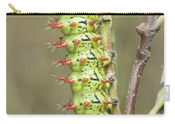 Close-up Of Moth Larva, Madagascar Carry-all Pouch