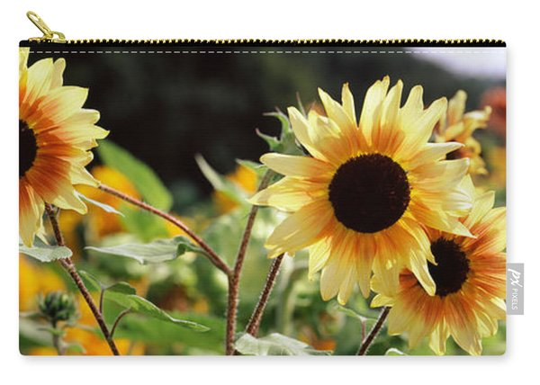 Close-up Of Sunflowers Helianthus Annuus Carry-all Pouch