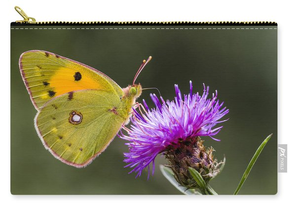 Clouded Yellow Butterfly Feeding Carry-all Pouch