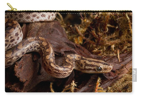 Colombian Rainbow Boa Epicrates Maurus Carry-all Pouch
