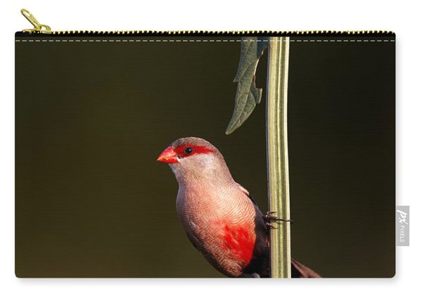 Common Waxbill Carry-all Pouch