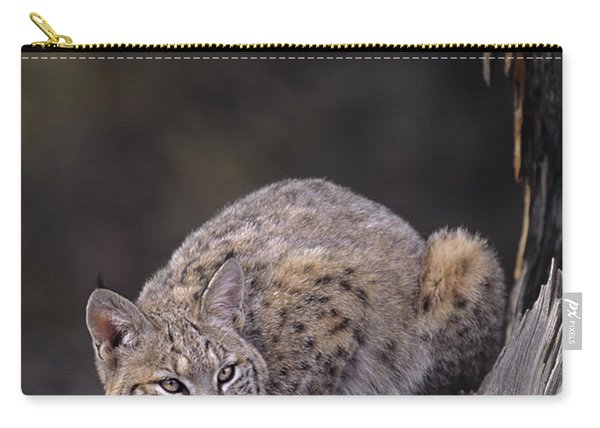 Crouching Bobcat Montana Wildlife Carry-all Pouch