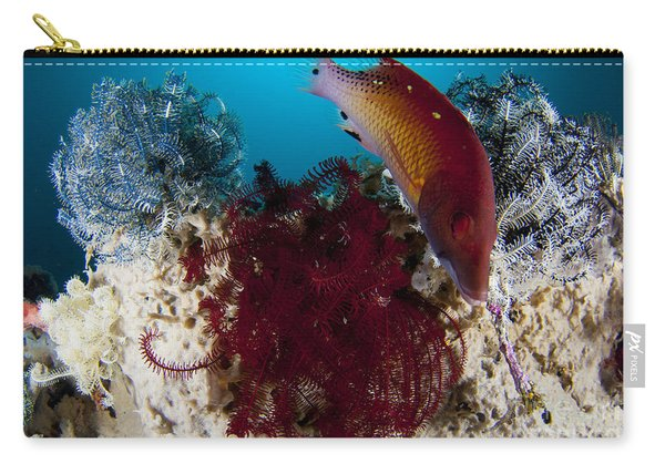 Dianas Hogfish Swimming Between Three Carry-all Pouch