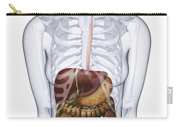 Digestive System, Illustration Carry-all Pouch