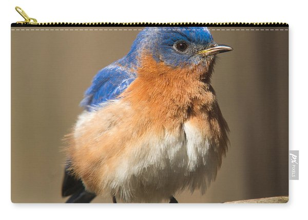 Eastern Bluebird Male Ruffled Carry-all Pouch