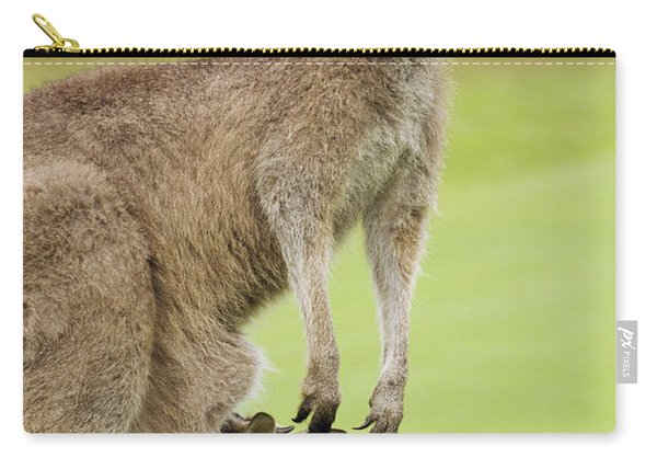 Eastern Grey Kangaroo With Joey Carry-all Pouch