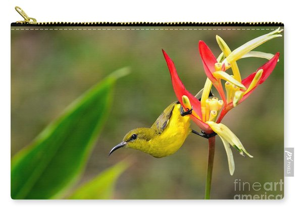 Female Olive Backed Sunbird Clings To Heliconia Plant Flower Singapore Carry-all Pouch