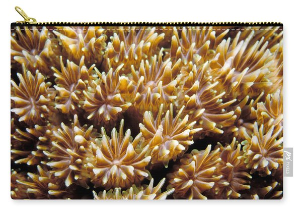 Fiji Soft Coral Carry-all Pouch