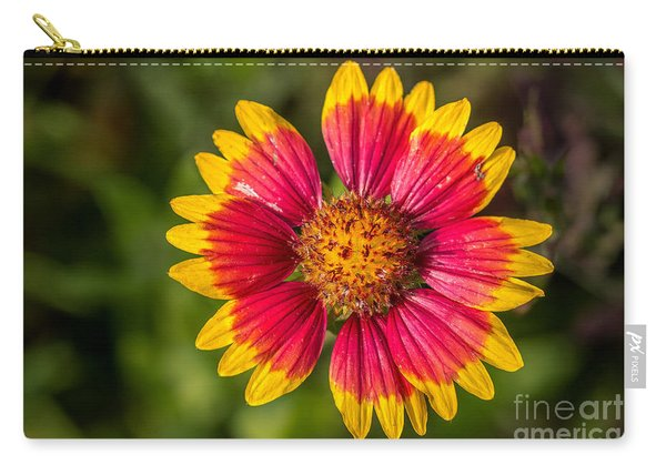 Gaillardia Shows Off Carry-all Pouch
