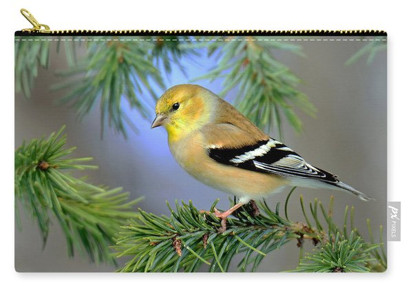Goldfinch In A Fir Tree Carry-all Pouch
