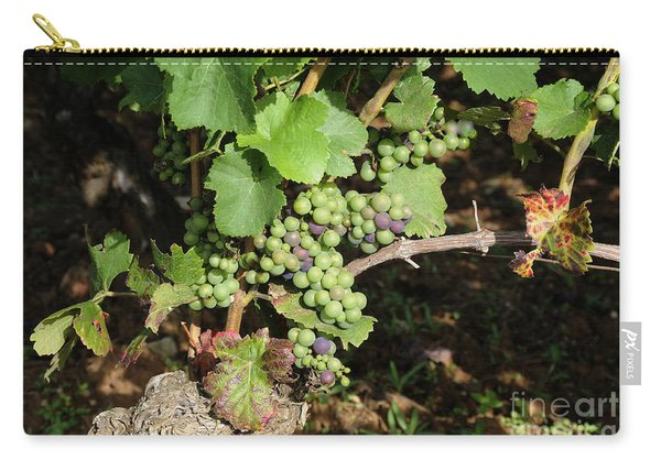 Grapevine. Burgundy. France. Europe Carry-all Pouch