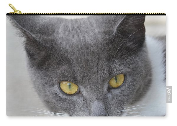 Gray Cat - Listening Carry-all Pouch