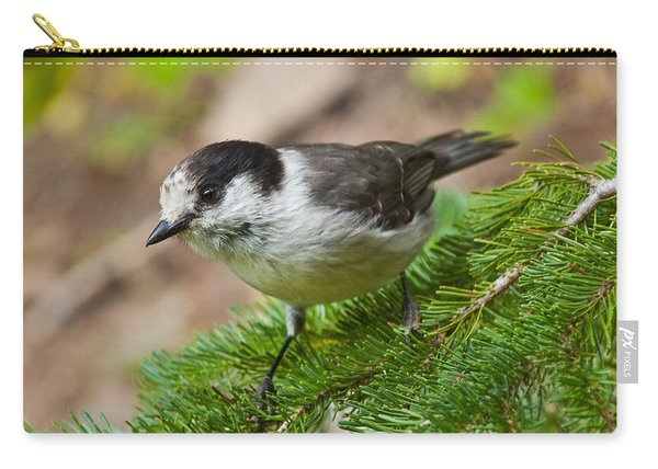 Gray Jay On Fir Tree Carry-all Pouch
