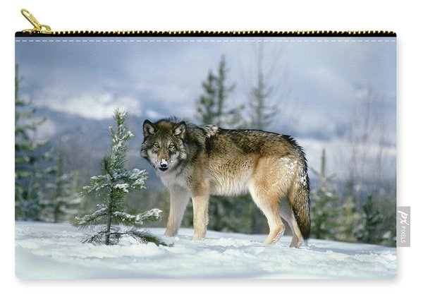 Gray Wolf Canis Lupus In Winter Snow Carry-all Pouch