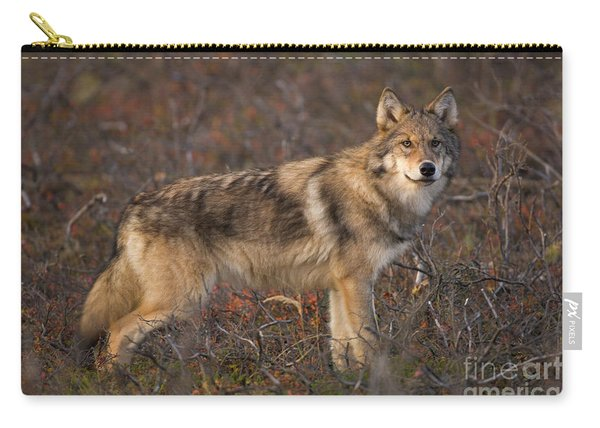 Gray Wolf On Tundra In Denali Carry-all Pouch