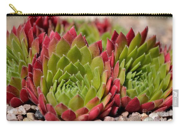 Carry-all Pouch featuring the photograph Houseleeks Aka Sempervivum From The Side by Scott Lyons